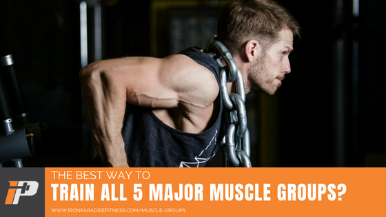 Muscle Groups Article Cover Iron Paradise Fitness