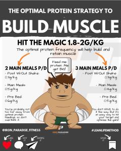 Protein Feeding Strategy Iron Paradise Fitness